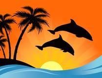 海豚日落 免版税图库摄影