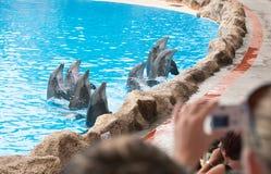 海豚显示 免版税库存图片