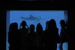 海豚注意 免版税库存图片