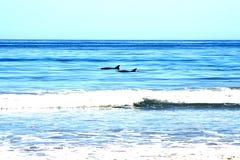 海豚海浪 免版税库存图片