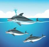 海豚游泳在海洋 皇族释放例证