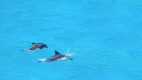 海豚游泳,跳跃在蓝色海洋云彩,海洋野生生物背景 免版税库存照片