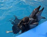 海豚游泳 免版税库存照片