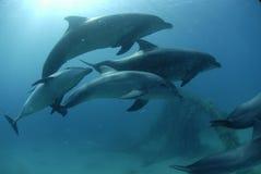 海豚红海 免版税库存照片