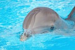 海豚纵向  库存照片