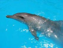 海豚绿松石水 库存图片
