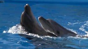 海豚舞蹈 股票视频