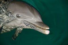 海豚表面 库存图片