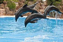 海豚装箱 库存照片