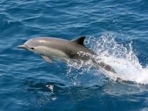 海豚跳的海洋 库存照片