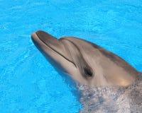 海豚顶头图片-储蓄照片 免版税图库摄影