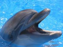 海豚顶头图片-储蓄照片 库存照片