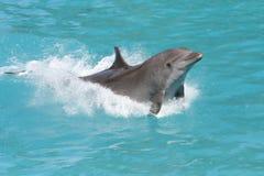 海豚飞溅 库存照片