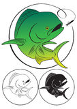 海豚鱼 免版税库存照片