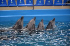 海豚,傲德萨 库存照片