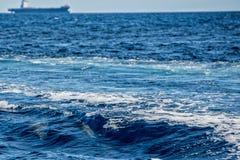 海豚,当跳跃在深蓝色海时 免版税库存照片