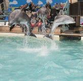 海豚:妈妈和2个儿子一个跃迁的在罗斯托夫dolphinarium 免版税库存图片