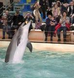 海豚嘴在天空中拿到球在罗斯托夫dolphina 库存图片