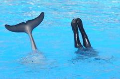 海豚&潜水员 免版税库存图片