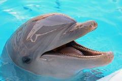 海豚 免版税库存图片