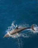 海豚 库存图片