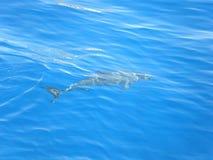 海豚 图库摄影