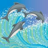 海豚 免版税库存照片