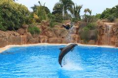 海豚 库存照片
