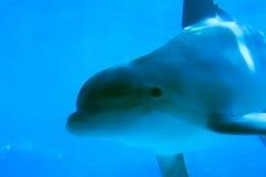 海豚4 库存照片