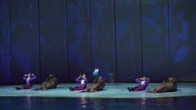 海象展示在海洋学和海洋生物Moskvarium股票英尺长度录影中心 股票录像