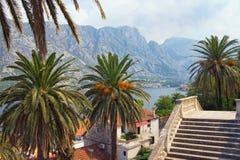 海边从我们的夫人诞生教会的台阶的Prcanj镇看法  海湾kotor montenegro 免版税图库摄影