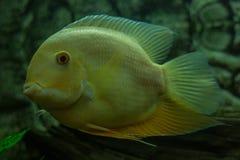 海边动物 免版税库存照片