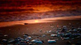 海边小卵石 免版税图库摄影