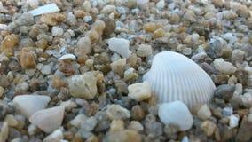 海边石头 库存图片
