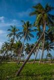 海边秀丽在吉登伯勒姆,南印度 图库摄影