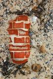海边背景-石头、小卵石和壳在海滩 免版税库存照片