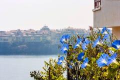 海边风景-蓝色大竺葵在堤防开花反对背景 免版税库存照片