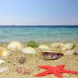 海运壳和珍珠 免版税库存图片