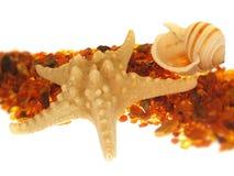 海运壳海星 图库摄影