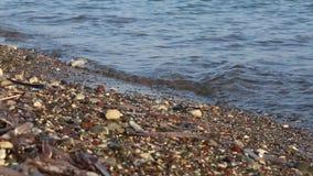 海运的软的通知沙滩的 影视素材