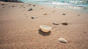 海运的通知海滩的 库存照片