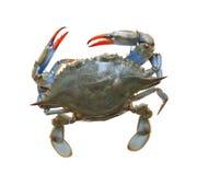 海运螃蟹 库存图片