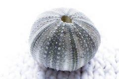 海运shell2 库存照片