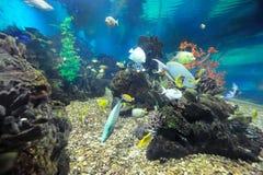 海里的世界 免版税库存照片