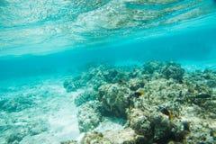 海里的场面:新喀里多尼亚 库存照片