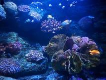 海里的珊瑚礁美好的场面与海鱼的 免版税图库摄影