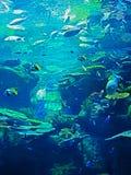 海里的珊瑚礁美好的场面与海鱼的 免版税库存照片