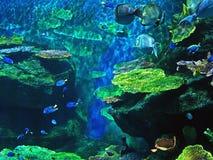 海里的珊瑚礁美好的场面与海鱼的 库存图片