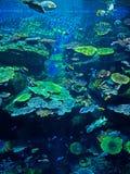海里的珊瑚礁风景场面与海鱼的 库存图片