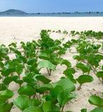 海野生植物 免版税库存图片
